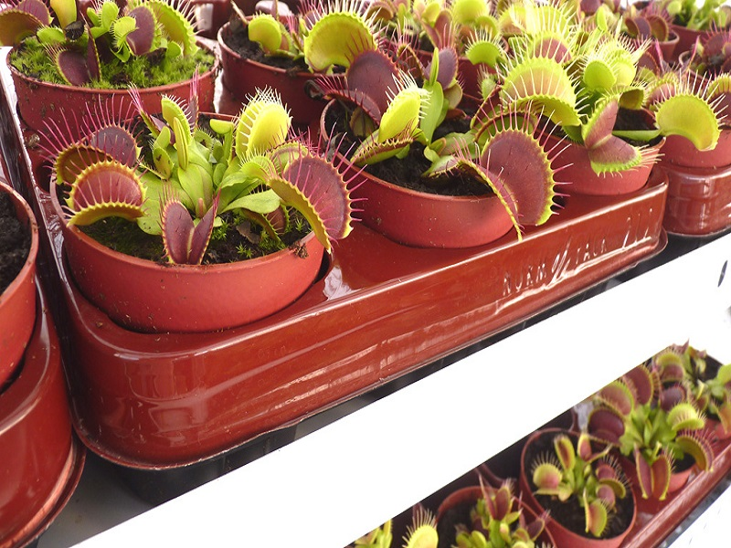 Carnivorous plants trolleys