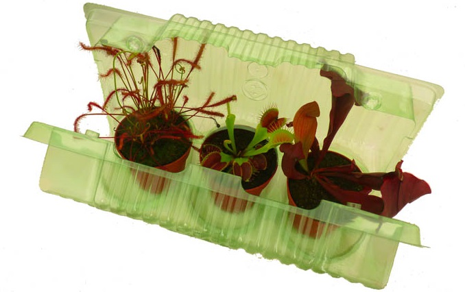 3 plants blister pack