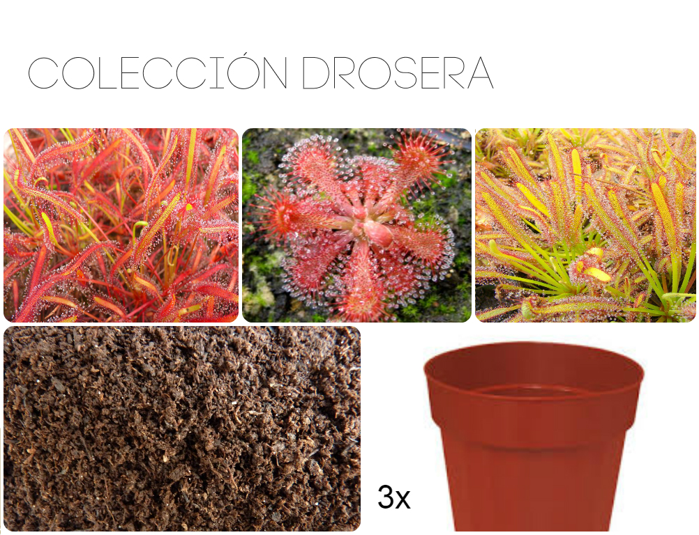 Drosera collection