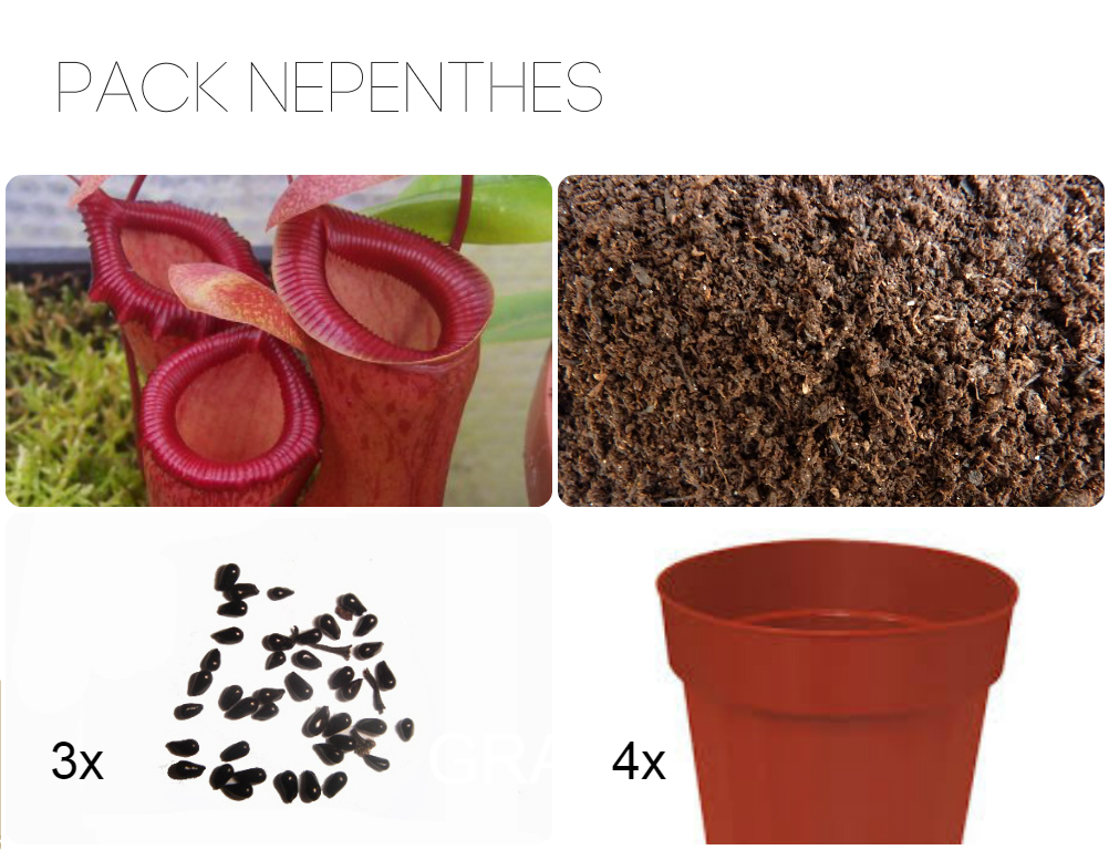 Pack principiantes 'Nepenthes'