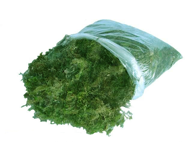 Sphagnum moss small bag (10 L)