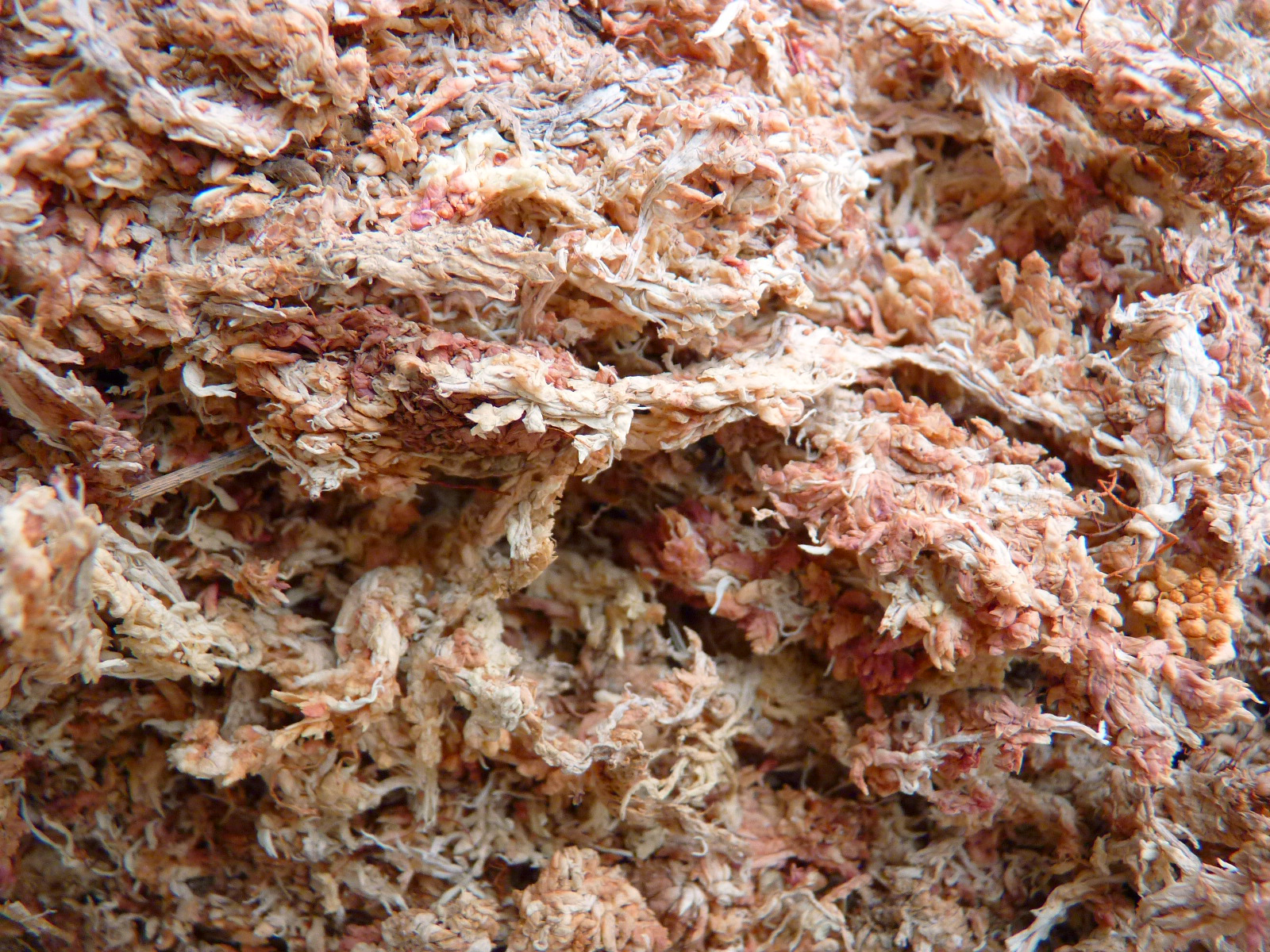 Dried sphagnum moss (ground)
